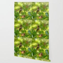 Cedarwaxwing in honeysuckle Wallpaper