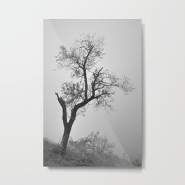 Tree by the fort. Foggy morning in Granada Metal Print