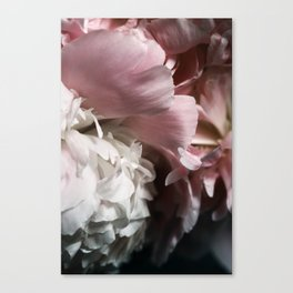 Blushing Canvas Print