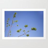 Tropical Trees- Blue Skies Art Print