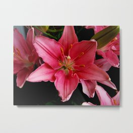 A Lily for Lily Grissom Metal Print