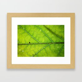 Macro Leaf no 9 Framed Art Print