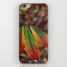 Traffic Light Leaves iPhone & iPod Skin
