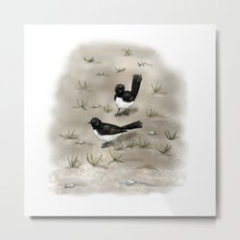 Willie Wagtails Metal Print