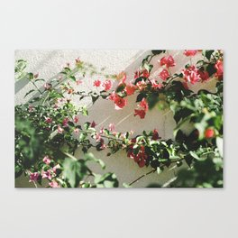 Pink & White. Canvas Print