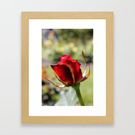Rose No.7 Framed Art Print