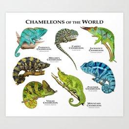 Chameleons of the World Art Print