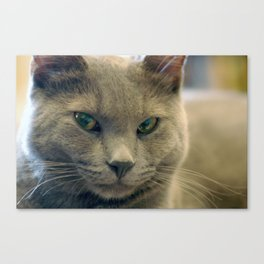 Hodge Contemplates Canvas Print