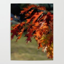 SOFT FALL COLOR LEAVES Poster