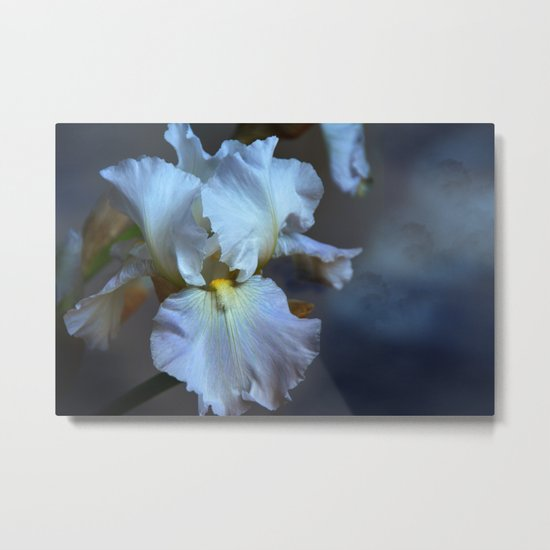 Blue bearded Iris in a cloudy sky Metal Print