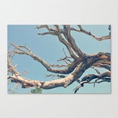 Driftwood Ladder Canvas Print