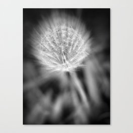 COSMIC DANDELION Canvas Print