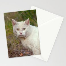 Wild White Cat 435 Stationery Cards