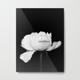 White Peony Black Background Metal Print