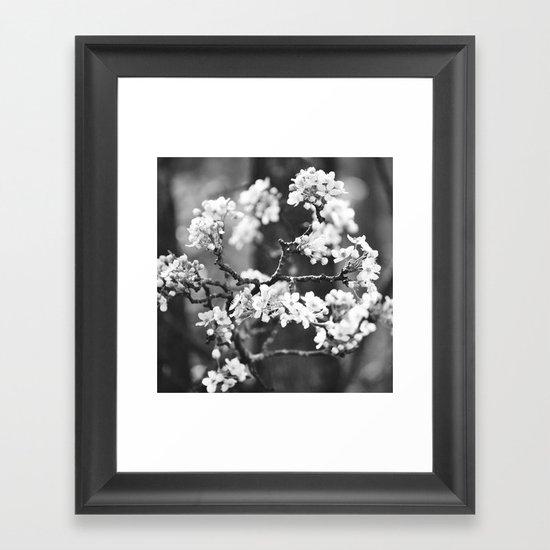 Pear Blossom B/W Framed Art Print