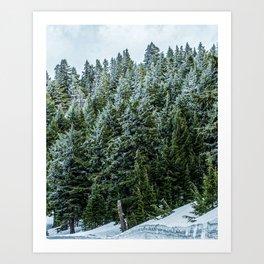Snow Bank Woodlands // Photograph of the Dense Blue Green Evergreen Pine Tree Forest Art Print