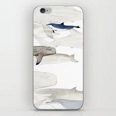 Life Aquatic iPhone & iPod Skin