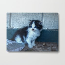 Black + White Kitten Metal Print