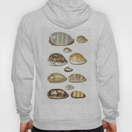 Eleven large and small tropicalcowrie shells by Johann Gustav Hoch (1716-1779) Hoody