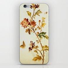 Chrysantheme iPhone & iPod Skin