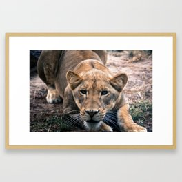 Eyeing Prey Framed Art Print
