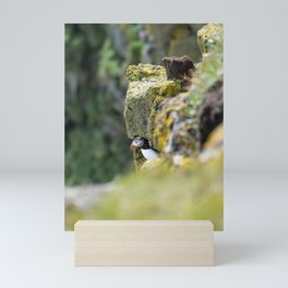 Puffin in front of its burrow in the cliff rocks of Cape Ingolfshofdi   Travel photography Iceland Mini Art Print