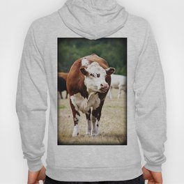 Herefordshire Cow Hoody