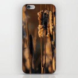 Cattails in winter iPhone Skin