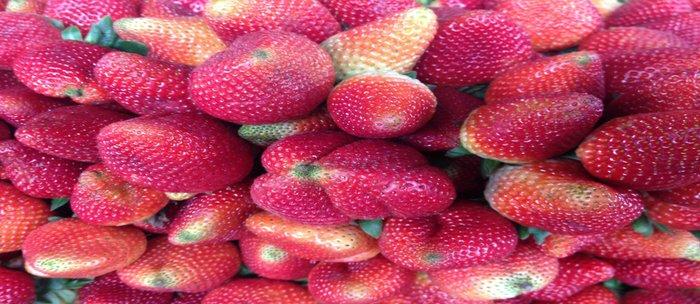Strawberries in Paloquemao - Fresas en Paloquemao Coffee Mug