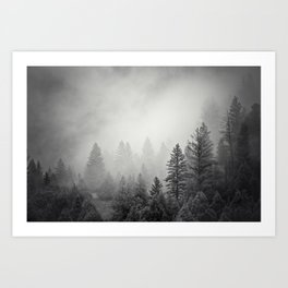 Pines in Fog   Black and White Landscape Art Print