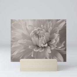 Monochrome chrysanthemum close-up Mini Art Print
