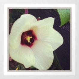 Okra Bloom Art Print