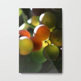 Grapes 2 Metal Print