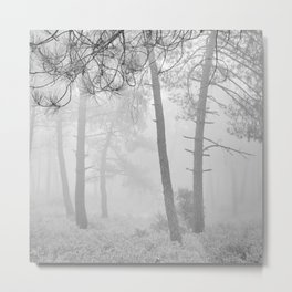 Dream Forest. Looking For..... Metal Print