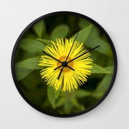 Doronicum Caucasicum Wall Clock
