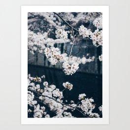 Sakura ii Art Print