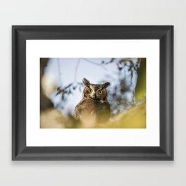 Okanagan Owl Framed Art Print