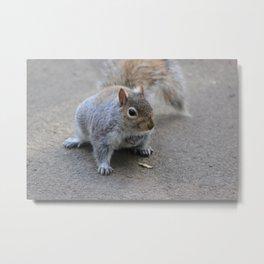 Got any Nuts? Metal Print