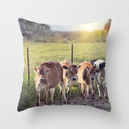 Steers in a farmland at sunset Throw Pillow