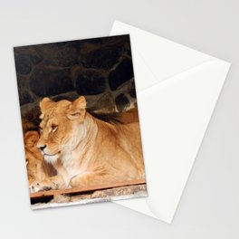 Zoo animals in cages and aviaries Stationery Cards