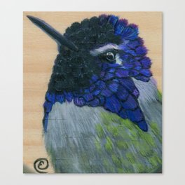 Costa's Hummingbird Canvas Print