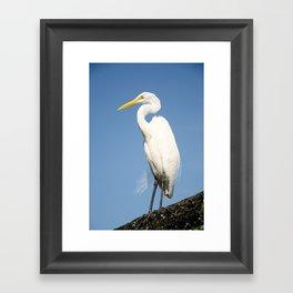 Greater White Egret Framed Art Print
