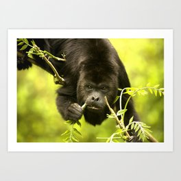 Howler monkey Art Print