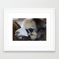 alpaca Framed Art Prints featuring Alpaca by Deborah Janke