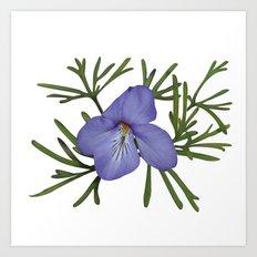 Viola Pedata, Birds-foot Violet #society6 #spring Art Print