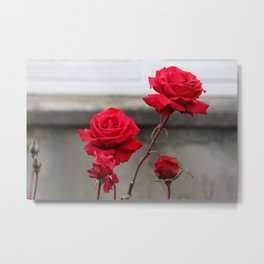 Bright Red Roses Metal Print