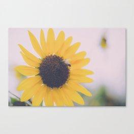 Colorado Sunflower Canvas Print