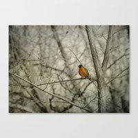 robin Canvas Prints featuring Robin by Dorothy Pinder
