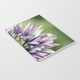African Double Daisy Notebook