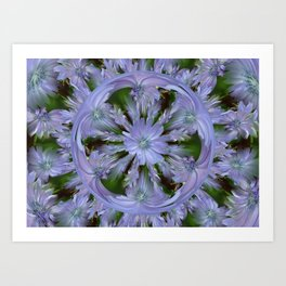 Chicory in the Round Art Print